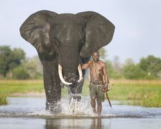 What a life ~ African Elephant & Mahout - Imgur