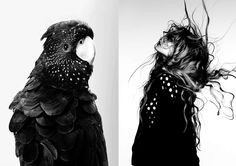 Leila Jeffreys: Rosie, Red-Tailed Black Cockatoo   Ben Hassett: Magdalena Frackowiak for Vogue