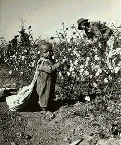 Baby Picking Cotton