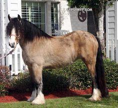 Gypsy Vanner Horses for Sale | Mare | Contessa