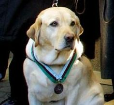 Roselle, the 9/11 Hero and Guide Dog, who led her blind owner and others down 78 flights of stairs in Tower One of the World Trade Center moments before it collapsed.