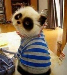 Anche panda cat ama le righe