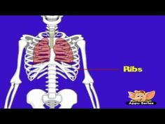 How The Human Body Works Kids Animation Learn Series 4 Teaching Science, Science For Kids, Science Activities, Life Science, Science And Nature, Teaching Time, Science Fun, Science Ideas, Preschool Learning