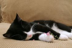 magicalnaturetour:   \tNap time by Tommy Hemmert Olesen    \tVia Flickr: \tAfter shredding the flower all over herself she fell asleep :-)  Sweet Dreams beautiful friends