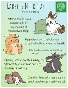 """Hay is so important to all our Fur Family """"Large and Small"""" Have small pets? get off your first order with Small Pet Select. I get snack money for the furkids:) Rabbits, Guinea Pigs, Chinchillas Pet Bunny Rabbits, Dwarf Bunnies, Rabbit Toys, Pet Rabbit, House Rabbit, Rabbit Diet, Dwarf Rabbit, Bunny Care Tips, How To Care For Bunnies"""