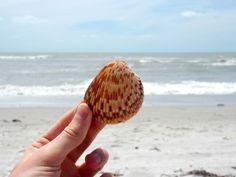 Blogbeitrag: Sanibel in Florida – die Magie der Muscheln #usa #florida #sanibel #reiseblog #reiseblogger