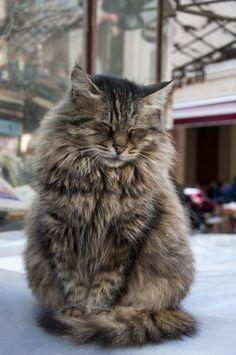 Beautiful close eyes cat