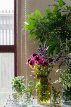 9月に入ってからの庭の様子と摘んだお花たちです。   庭のもみじと、      2016/9/7      ブルーベリーの葉っぱは紅葉していい感じに。     新しく仲間入りした葡萄色のカイラルディア・グレープセンセーションという名のお花も一緒に。とても丈夫らしいです。     ...