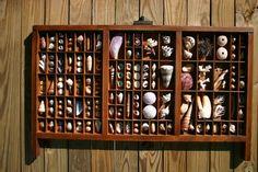 Vintage Seashell Printers Tray II by TidePoolStudio on Etsy, $225.00