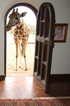 Giraffe Manor. I want to go to there.