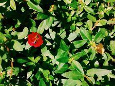 http://joicyrecco.blogspot.com.br/2015/06/projeto-09-on-09-flores.html