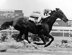 """Kelso (1957-1983). 5 Times Horse of the Year """"Once upon a time there was a horse named Kelso. But only once."""" – Joe Hirsch"""