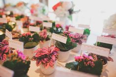 Potted Plant Place Cards | photography by http://www.christinefarah.com