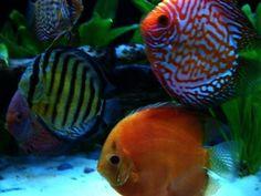 New Electric Siphon Vacuum Cleaner Water Filter Pump For Aquarium Fish Fg# Beautiful And Charming Fish & Aquariums