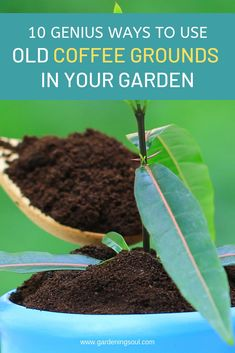 10 Genius Ways To Use Old Coffee Grounds In Your Garden Here are some exciting ways to give old coffee grounds a fresh life while benefiting the health, beauty and vitality of your garden. Garden Soil, Garden Care, Herb Garden, Garden Plants, Vegetable Garden, Terrace Garden, Home And Garden, Gardening For Beginners, Gardening Tips