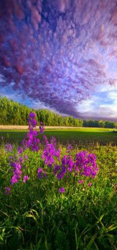 Photo by Phil Koch. Wisconsin Landscapes. [Follow WisconsinHouses for more local…