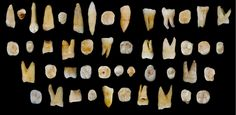 Teeth from a cave in China suggest that modern humans lived in Asia tens of thousands of years before they reached Europe, researchers say. The finding sheds light on the dispersal of Homo sapiens out of Africa and across the globe.