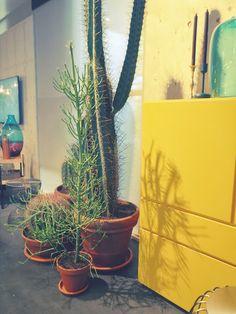 Woonbeurs 2013 - Eigen Huis en Interieur - cactus