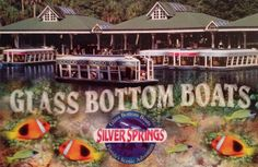 Postcard featuring the glass bottom boats at the Silver Springs park in Florida, sent to Germany via Postcrossing