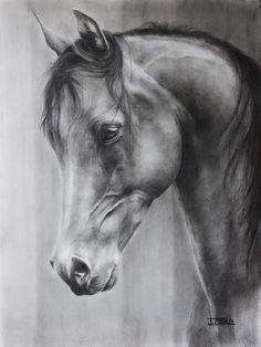 The Arabian ~ Reminds me of Sarah's beautiful drawing.: