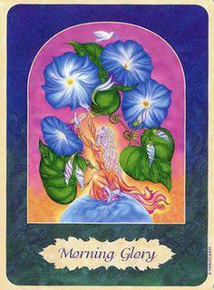 Morning Glory Flower Essence | Morning Glory Flower Remedy