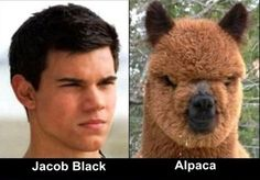 I love me some Jacob black but this was funny!