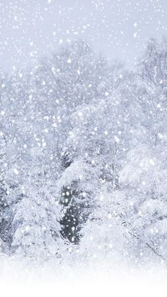 Heavy Snow Forest #iPhone #5s #wallpaper