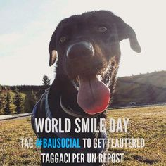 Oggi è il #WorldSmileDay ! Posta una foto del tuo cane sorridente e metti l'hashtag #BauSocial! La inseriremo sul nostro sito insieme ai nostri amici più sorridente :)) . Tag us to get featured on our website! . #Repost with @repostapp. . @rcfoto  #Milano #cane #cani #dog #dogs #mydog #dogoftheday #dogofinstagram #instadog #blackdog #tagsforlikes #lablove #labrador #blacklab #retriever #snoopy #puppy #bausmile #insta_dog #doglover #instadog
