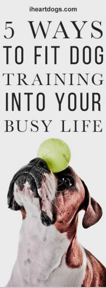 5 Ways To Fit Dog Training Into Your Busy Life