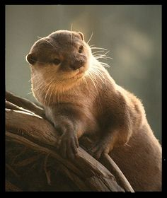 The Daily Otter | OMG Otters! | Page 242