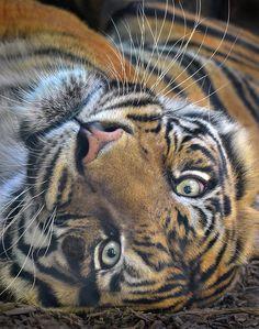 Upsidedown #cat by Ion Moe