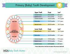 WDA Baby Teeth Matter eruption chart #BabyTeethMatter