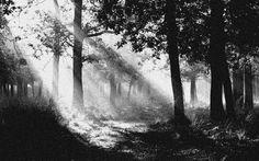 Forest monochrome