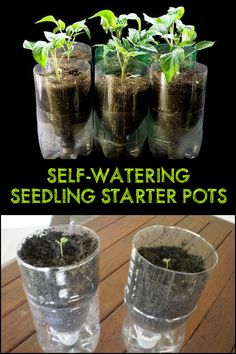 With this DIY seedling starter pots, you're sure that your plants are watered with the right amount at the right time!