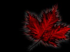 Maple Leaf - Canadian Wallpapers - CKA
