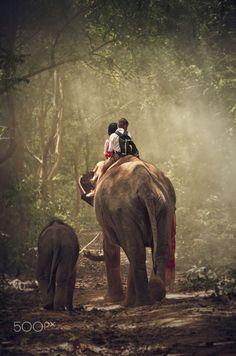 Kids and elephants,