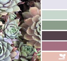 Succulent Hues - http://design-seeds.com/index.php/home/entry/succulent-hues26