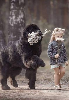 Dogs that are treated properly have the best temperaments and they hold no reservations in showing the love they have received. 5 Ways How To Show Your Dog Love Animals For Kids, Animals And Pets, Baby Animals, Funny Animals, Cute Animals, Cute Puppies, Cute Dogs, Dogs And Puppies, Baby Dogs