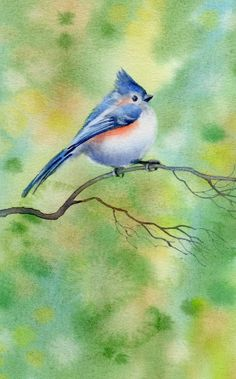 'Titmouse' watercolour painting by Barbara Fox   http://www.barbarafoxartstudio.com/