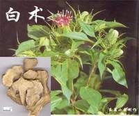 Bai Zhu or white atractylodes as it is often times known is a very effective cheap tonic that we use for people who have weakened immune systems or a weak digestive system. http://www.ehow.com/video_4400620_herbs-chinese-medicine-bai-zhu.html