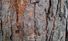 Tree, wood texture. http://www.geeksandpics.com/