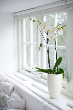 exPress-o: How to re-bloom your orchid