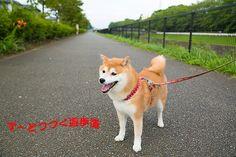 里親さんブログ今日の夕散歩 - http://iyaiyahajimeru.jp/cat/archives/60579