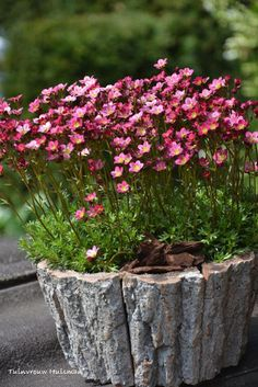 Great DIY ideas for your garden made from tree logs - Pflanzen Ideen Garden Yard Ideas, Garden Planters, Garden Projects, Container Plants, Container Gardening, Beautiful Gardens, Beautiful Flowers, Alpine Garden, Shade Garden