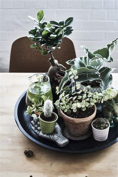 Fancy a green and lush garden but lack outdoor space? Find out how she uses indoor plants to decorate and zone her space. Grow a mini garden or design that calm green corner of yours!