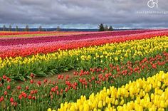 Field of colors