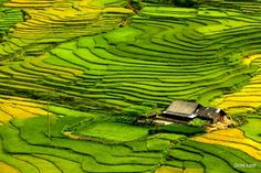 The amazing rice terrace from above #vietnam #sapa #travel