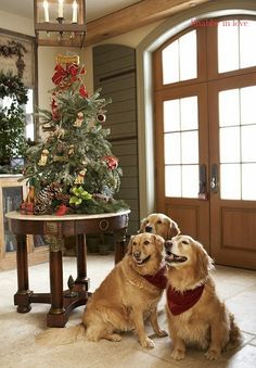 Great shot--I have a hard time getting Sassy to pose sometimes; can't imagine how hard it was getting 3 dogs to pose!