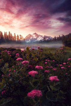 Purple Haze, Mount Shuksan, Washington (The Best Travel Photos) - Abschiedsbuch - Natur All Nature, Amazing Nature, Beautiful World, Beautiful Places, Beautiful Sunset, Landscape Photography, Nature Photography, Reflection Photography, Belle Photo