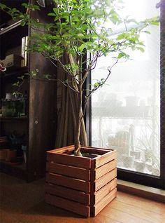 敷くだけじゃないんです。セリアの「100均ウッドデッキ」活用術   LOVEGREEN(ラブグリーン) Home Deco, Diy And Crafts, Plants, Room, Decoration Home, Flora, Rooms, Plant, Planting